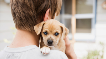 Care for Your Dog Online Training Course